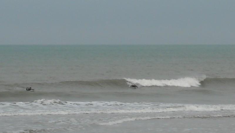 Surf report Le Trillou - France (17) 2009-08-08 09:00:00