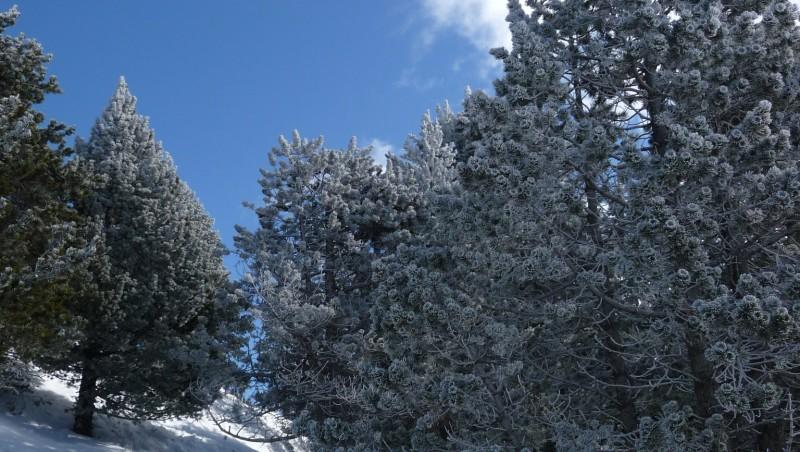 Snow report La Molina - Espagne (ES) 2010-02-24 09:00:00
