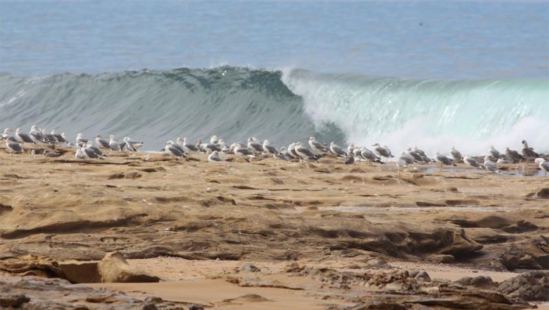 Surf report Imsouane - Cathédrale - Maroc (MA) 2010-10-04 11:50:00