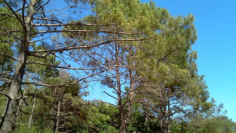 Wind report Le Grand Crohot - France (33) 2011-05-24 16:00:00