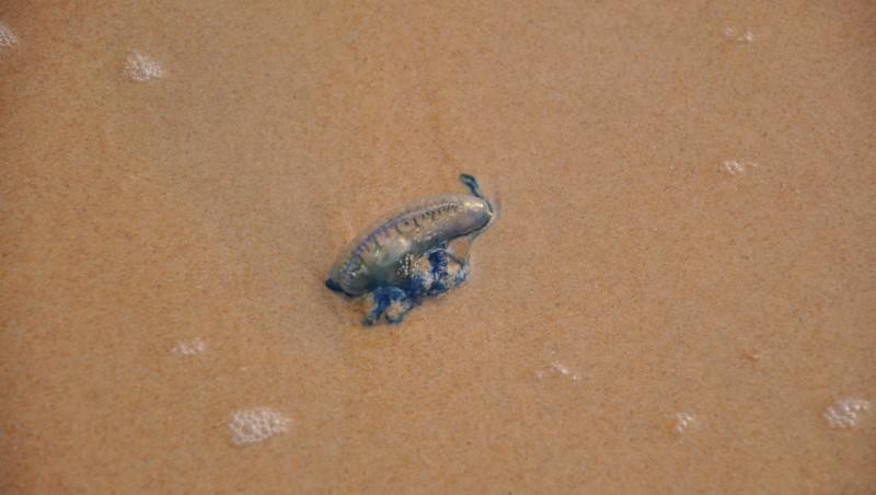 Surf report Curl Curl - Australie (AU) 2011-12-07 06:00:00