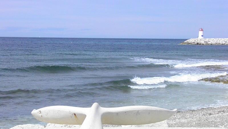 Surf report Sausset les Pins - Plage du Port - France (13) 2011-06-11 09:55:00