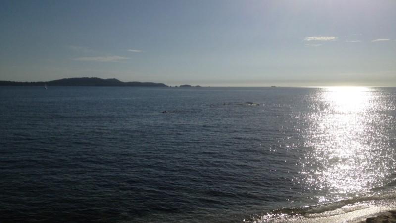 Surf report L'Almanarre - France (83) 2012-10-08 16:37:00