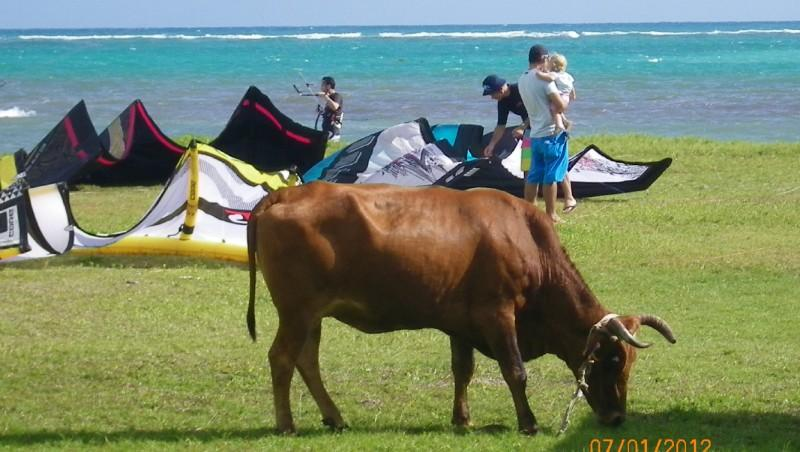 Wind report Bois  Jolan - Guadeloupe (GP) 2012-01-07 12:00:00