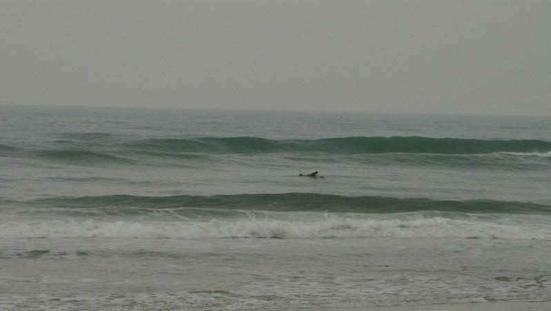 Surf report Mimizan - Plage Garluche - France (40) 2013-11-17 15:00:00