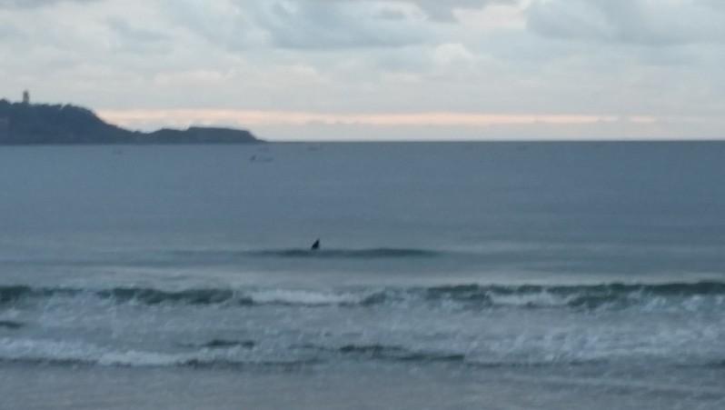 Surf report Hendaye - France (64) 2015-10-22 09:00:00