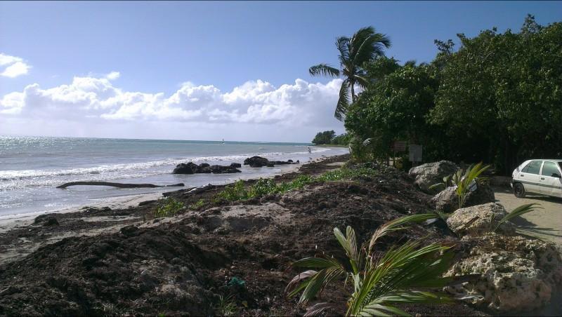 Wind report Bois  Jolan - Guadeloupe (GP) 2016-01-01 00:00:00
