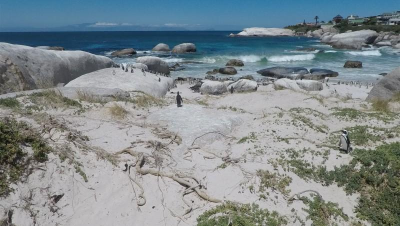 Wind report Hout Bay - Afrique du Sud (ZA) 2017-01-29 16:00:00