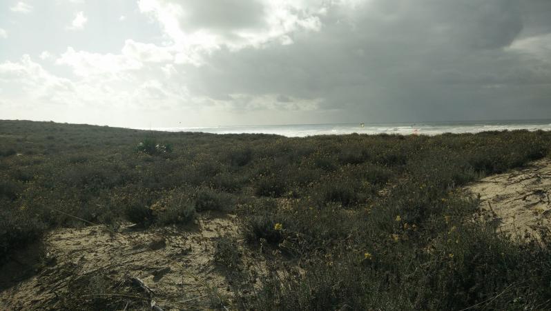 Wind report Cap-Ferret - Plage de L'Horizon - France (33) 2017-10-22 15:00:00