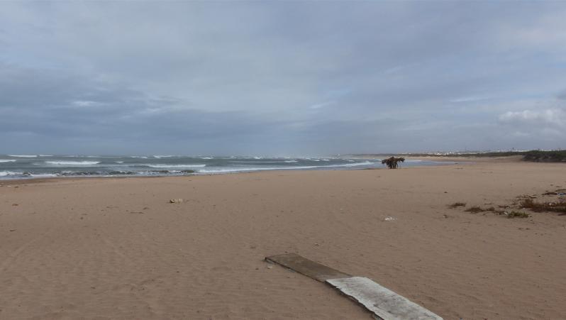 Wind report Oued Merzeg - Maroc (MA) 2019-11-22 14:00:00