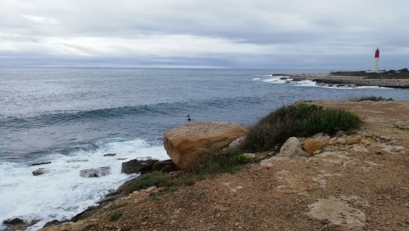 Surf report La Couronne - France (13) 2021-04-11 10:00:00