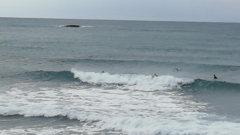 Surf report Sausset les Pins - Plage du Port - France (13) 2021-05-11 10:00:00