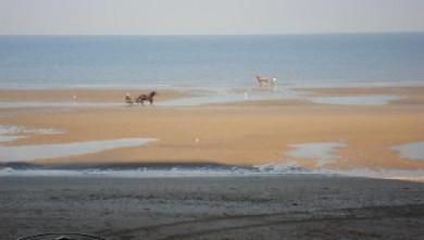 Surf report FR, Le Menhir (14) du 2007-11-17 12:00:00