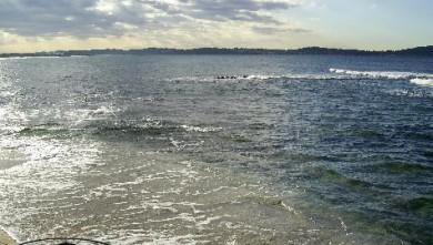 Surf report FR, L'Almanarre (83) du 2007-11-20 12:00:00
