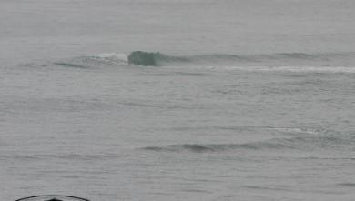 Surf report FR, Bidart Centre (64) du 2007-11-22 12:00:00