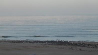 Surf report FR, Le Menhir (14) du 2007-12-13 12:00:00