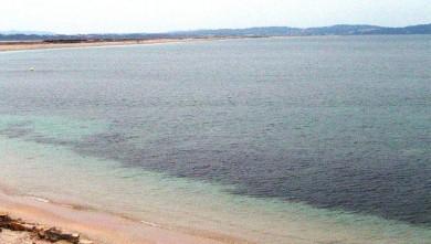 Surf report FR, L'Almanarre (83) du 2008-06-01 12:00:00