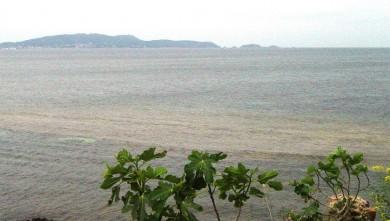 Surf report FR, L'Almanarre (83) du 2008-06-02 12:00:00