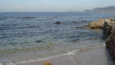 Surf report FR, L'Almanarre (83) du 2008-06-20 12:00:00
