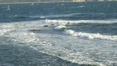 Surf report FR, L'Almanarre (83) du 2008-07-18 12:00:00
