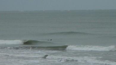 Surf report FR, Le Ptit Bec (17) du 2008-02-03 15:00:00