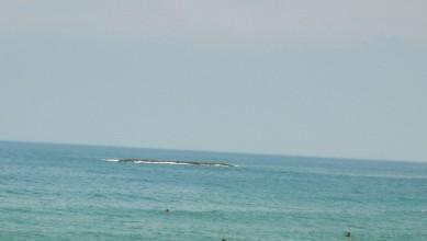Surf report FR, Biarritz - Grande Plage (64) du 2008-07-25 12:00:00