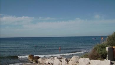 Surf report FR, Sausset les Pins - Plage du Port (13) du 2008-08-05 12:00:00