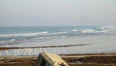 wave report FR, La Torche (29) du 2008-08-30 12:00:00