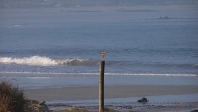 Surf report FR, La Torche (29) du 2008-09-29 12:00:00