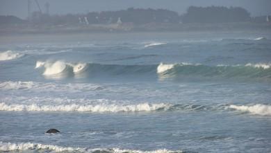 Surf report FR, Pors Carn (29) du 2008-10-08 12:00:00