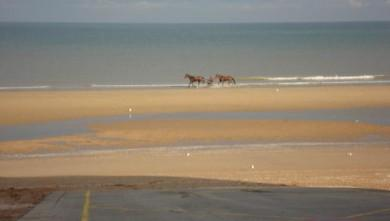 Surf report FR, Le Menhir (14) du 2008-10-18 12:00:00