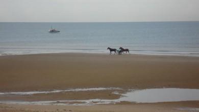 Surf report FR, Le Menhir (14) du 2008-11-07 12:00:00