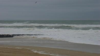 Surf report FR, Seignosse - Le Penon (40) du 2008-12-04 12:00:00