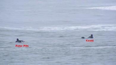 Surf report FR, La Torche (29) du 2009-03-12 12:00:00