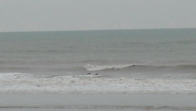 Surf report FR, Grand Village (17) du 2009-04-12 12:00:00
