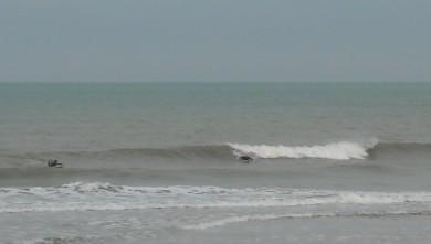 wave report FR, Le Trillou (17) du 2009-08-08 09:00:00