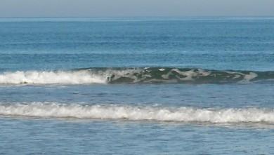 Surf report FR, Le Trillou (17) du 2009-08-18 08:30:00