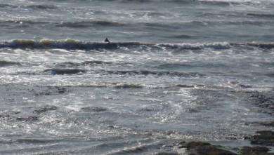 wave report FR, L'Anse du Sud (44) du 2009-10-21 15:00:00