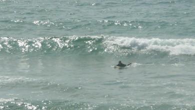 Surf report FR, Capbreton - La Centrale (40) du 2010-05-15 17:00:00