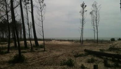 Wind report FR, La Lagune (33) du 2010-06-05 16:00:00