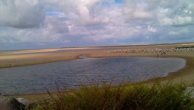 Wind report FR, La Palmyre - Bonne-Anse (17) du 2010-07-24 15:00:00