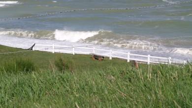 Surf report FR, Vaucottes (76) du 2010-08-24 11:25:00