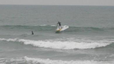 wave report FR, Grand Village (17) du 2011-09-03 09:00:00