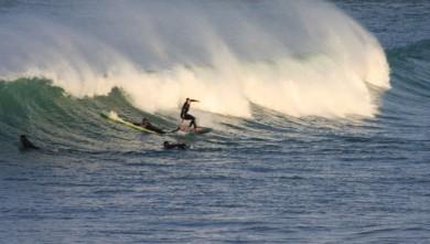 Surf report FR, Biarritz - Grande Plage (64) du 2011-11-12 09:00:00
