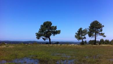 wave report FR, Lacanau Lac (33) du 2012-06-21 11:00:00