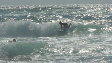 Surf report FR, Vieux Boucau (40) du 2013-07-29 16:00:00