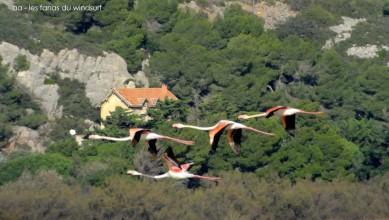 Wind report FR, Etang de La Palme (11) du 2014-12-03 12:00:00
