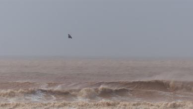 Wind report MA, Essaouira (MA) du 2018-03-01 13:00:00